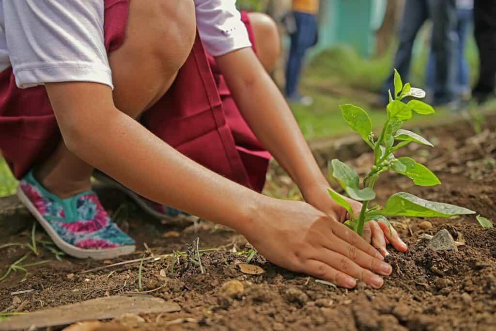 Ökologischer Fußabdruck - einen Baum pflanzen